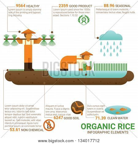 Healthy food organic rice infographic flat design. Knowledge healthy food concept. Cultivation. Agriculture. Organic farming. Biological farming. Ecological farming. Good food good health. World food.