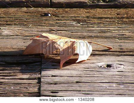 Dried Leaf On Dock