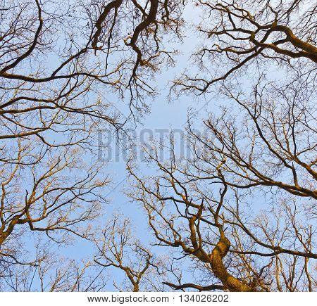 crown of tree under blue sky in spring