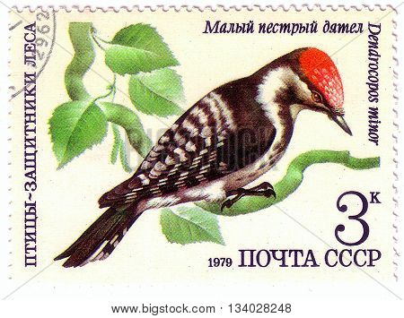 Ussr - Circa 1979: A Stamp Printed In Ussr Shows A Dendrocopos Minor, Woodpecker, Bird, Small Spotte