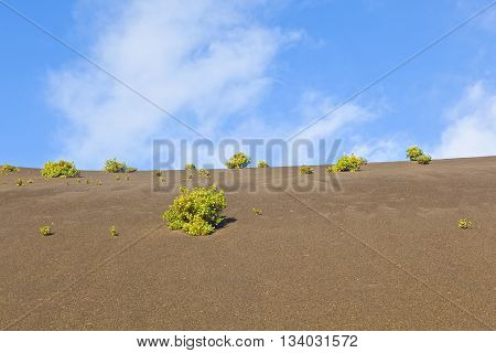 Sparse Vegetation On Volcanic Hills In Timanfaya National Park