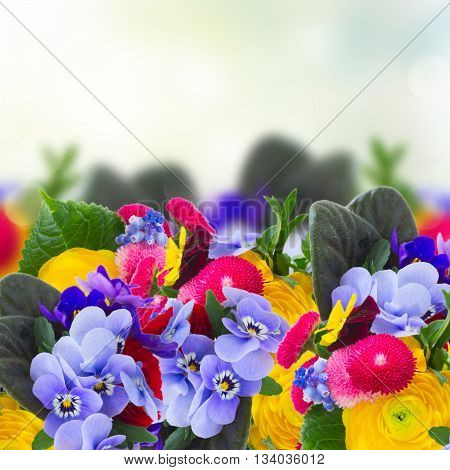 Posy of violets, pansies, daisies and ranunculus flowers in garden