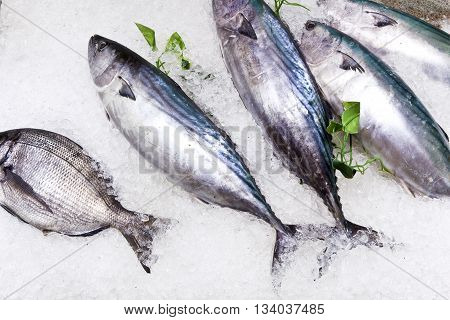 Fresh Fish On Ice For Selling At The Market