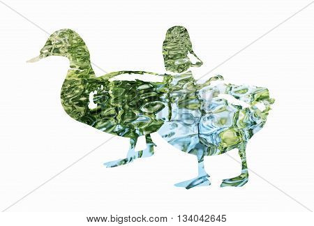 Silhouette of two mallard ducks filled with rippled water surface. Vector graphic. Natural theme. Ducks stencil. Birds theme. Cutout stencil animal. Blue and green reflections.
