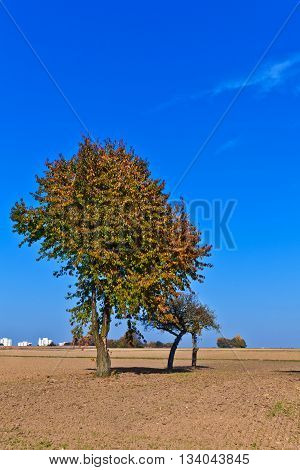 Beautiful Tree In Ploughed Acre
