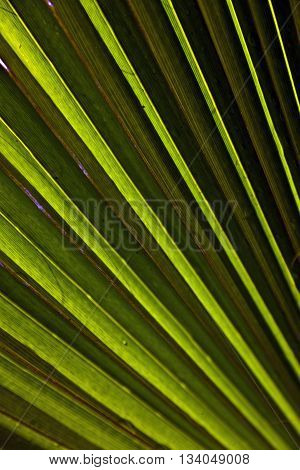 beautiful palm leaf texture in sunset gives a harmonic background