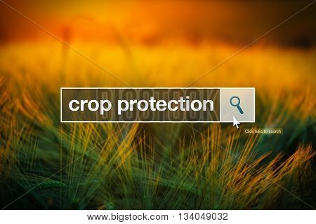 Crop protection in internet browser search box barley field in background