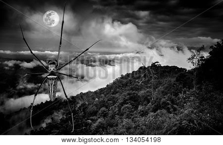 Halloween background. Closeup spider and fresh nature against beautiful sky and full moon at nighttime. Black and white tone. The moon taken with my own camera no NASA images used.