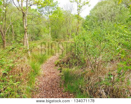 A nature trail from the Avalon Marshes in Somerset, England.