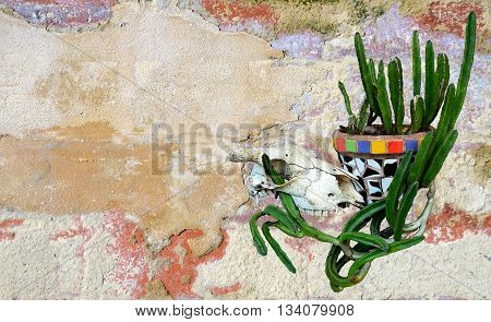 Animal (sheep) skull and Mexican mosaic pot plant with cactus on a rustic rendered painted wall background. Mexican or western ranch theme