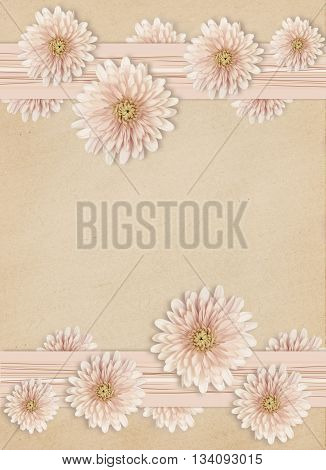 Aster flowers edges on pink paper background
