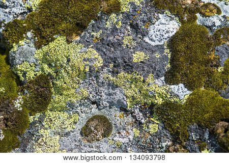 Organic background texture stone rock random colorful pattern with moss and lichen