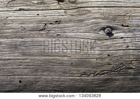Natural aged weathered organic gray pine log texture linear pattern background