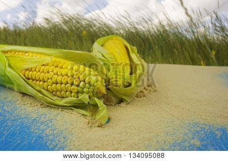 Yellow Maize Polenta Flour on a wooden blue background