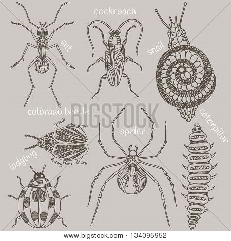 Hand drawn beetles set. Insects for design icons logo print or else. Caterpillar cockroach snail ladybug spider colorado beetle and ant. Vector illustration.