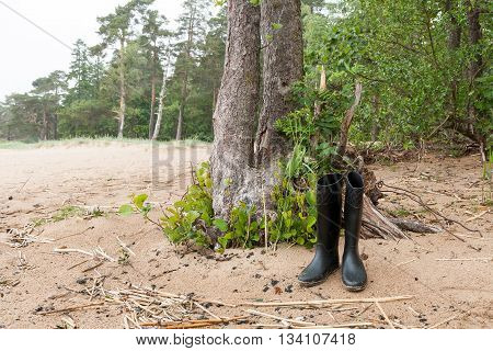 Black rubber boots from the trunk of the tree on the sandy beach in a pine forest.