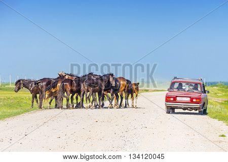 Village Morshanskoe Kargatskiy rayon Novosibirskaya oblast Siberia Russia - June 12 1916: a group of domestic horses and car on rural road