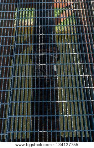 Closeup shot of a metal grid on a bridge that spans Green River in Kent Washington.
