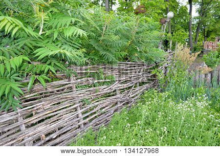 wicker rural fence in green thickets of plants