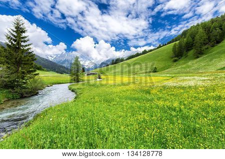 Alpine valley covered in flowers at spring at the Austrian Alps