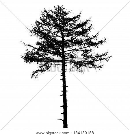 Vector illustration of tree silhouettes. Black and white illustration.