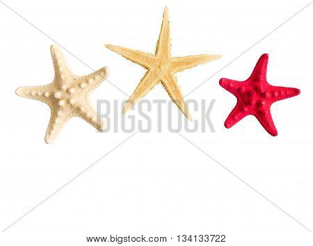 Sea stars collection isolated on white background.