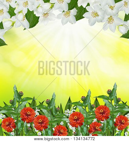 Spring landscape with delicate jasmine flowers. zinnia