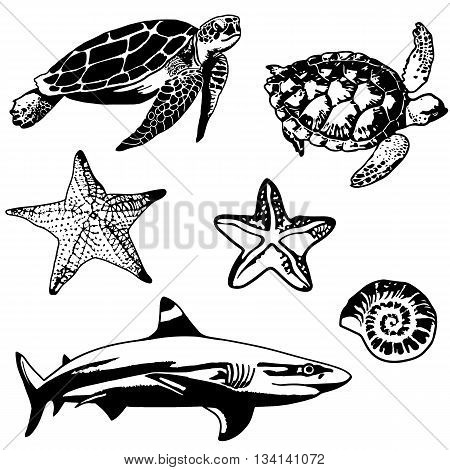 Set of sea, ocean animals, elements. Turtle, shark, sea star, shell, tortoise. Vector illustration.