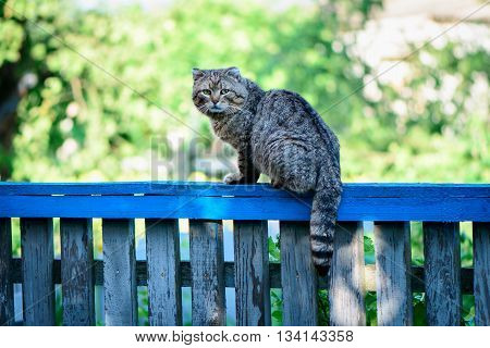 Cat on a fence staring at photographer