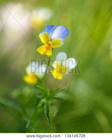 Spring flowers background. Shallow DOF