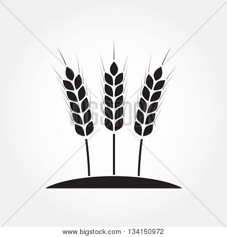 Wheat ears or rice icon. Agricultural and crop symbols isolated on white background. Design element for bread packaging or beer label. Vector illustration.