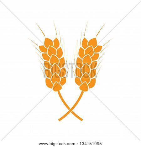 Wheat ears or rice icon. Crop symbol isolated on white background. Design element for bread packaging or beer label. Vector illustration.