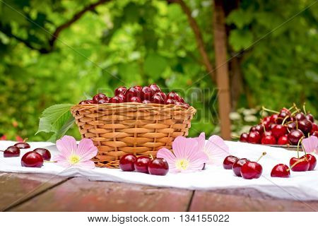 Fresh organic cherries in wicker basket on table and sour cherries in plate - healthy fruit