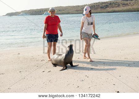 Beach  At Santa Fe Island In Galapagos