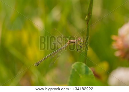 Macro of a damselfly holding onto a flower stem.