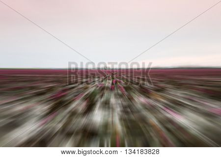 Lake of red lotus with radial blurred background, stock photo