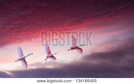 Bright sky on sunset or sunrise with pink birds natural background environment or ecology concept