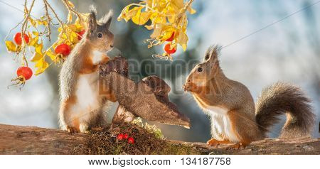 red squirrels are standing with mushrooms and brier