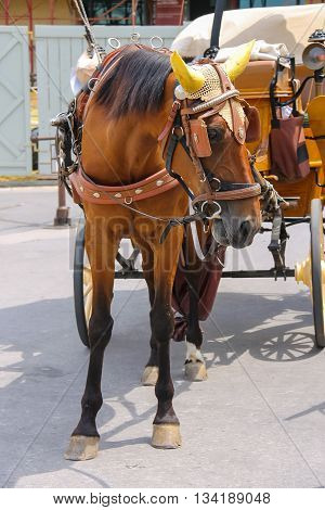 Horse-drawn carriage on Piazza del Duomo. Pisa Italy