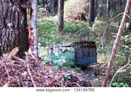 Old wooden treasure chest abandoned in the woods