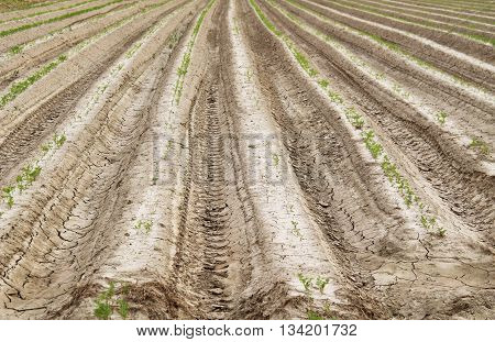 lines of furrows on the ploughed field