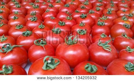 Many red tomatoes organized and creates beautiful background