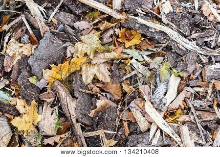 colored background of kindling wood and fallen leaves autumn backing autumn concept
