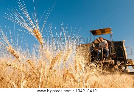 Wheat Harvesting Time