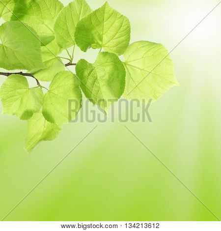 Summer or Spring Concept with Green Leaves