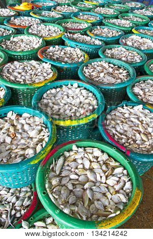 Many small fish for trading of fishermenindustrial fish packaging.