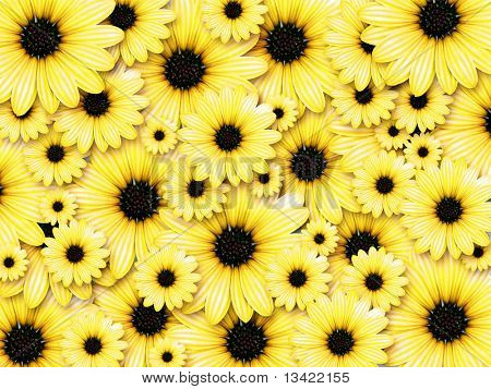 Background made from yellow flowers