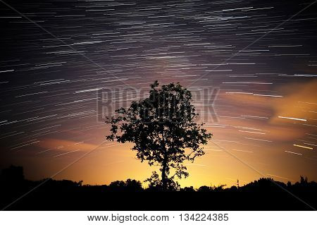 Star tracks at night and silhouette of tree. Startrails.