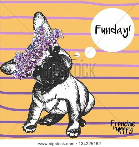 Vector close up portrait of french bulldog girl wearing the flower wreath. Hand drawn domestic pet dog illustration. Isolated on orange background with purple strips.