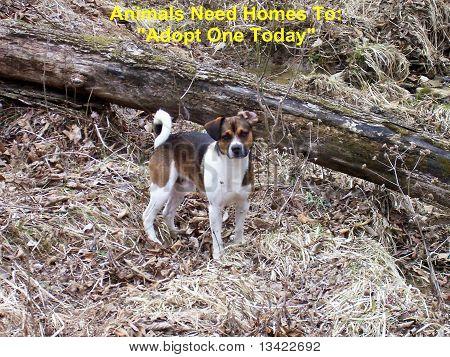 Adopt A Pet Dog Concept Sign